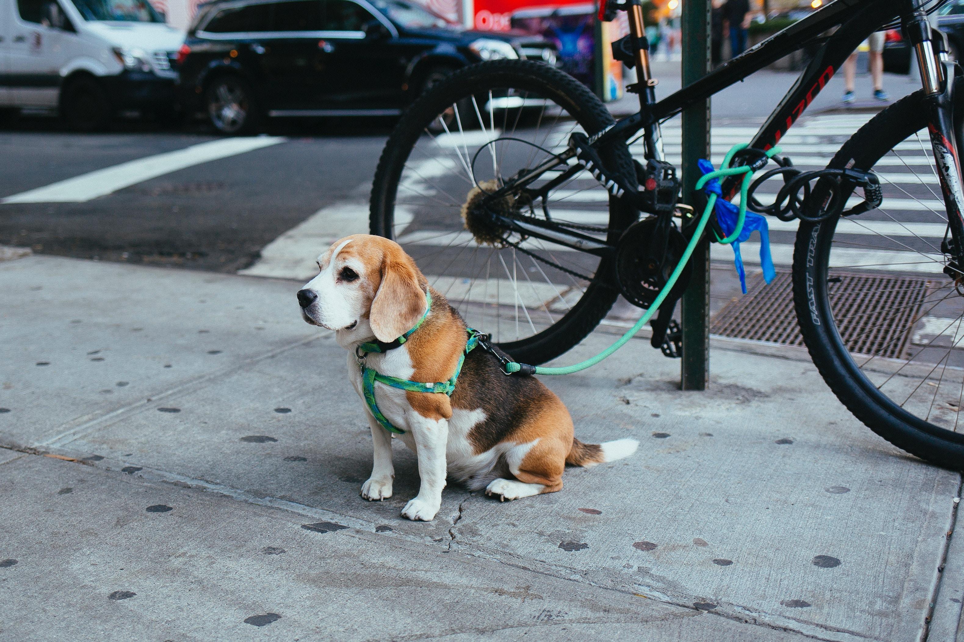 hondenfietskar